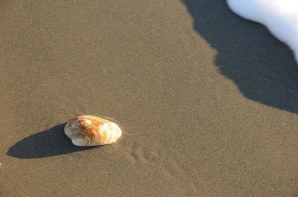 Beach Shell Sand Sea Ocean Art Print featuring the photograph Shell And Waves Part 2 by Alasdair Turner