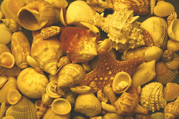 Seashells Art Print featuring the photograph Shells by Christopher Kirby