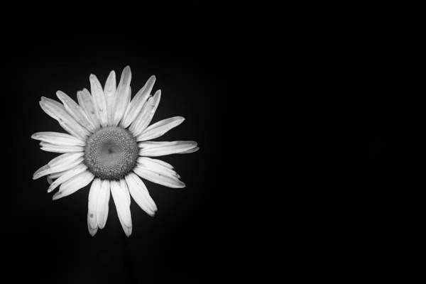 Flower Art Print featuring the photograph Shine Away by Shane Holsclaw