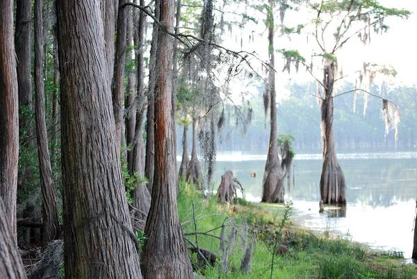 Nature Art Print featuring the photograph Shores Of Compass Lake by Peter McIntosh