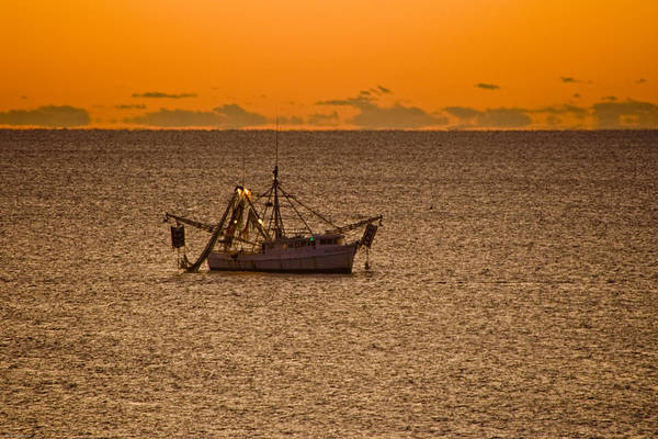 Sunrise Art Print featuring the photograph Shrimping In The Morning by Ches Black