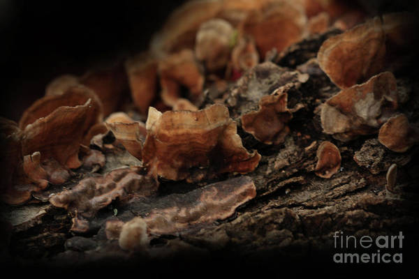 Mushroom Photography Art Print featuring the photograph Shrooms by Kim Henderson