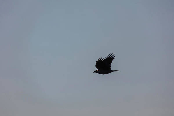 Crow Art Print featuring the photograph Silhouette May 2016. by Leif Sohlman