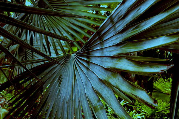 Silver Palm Leaf Art Print featuring the photograph Silver Palm Leaf by Susanne Van Hulst