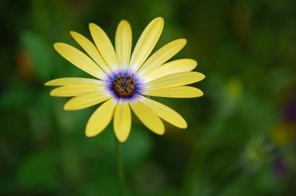 Flower Art Print featuring the photograph Simple Flower by Jennifer Englehardt