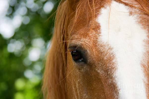 Horse Art Print featuring the photograph Skipys Eye by Angela Doelling AD DESIGN Photo and PhotoArt