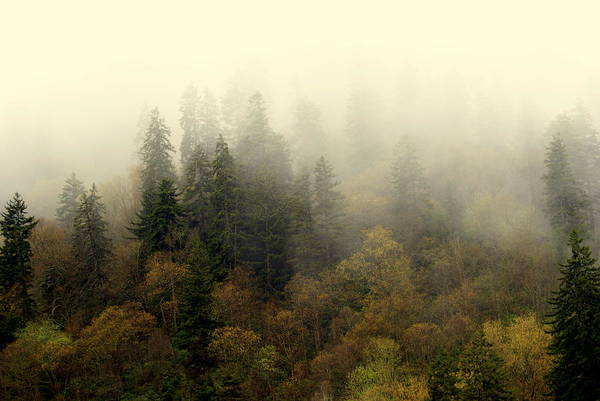 Fog Art Print featuring the photograph Smoky Mount Horizontal by Marty Koch