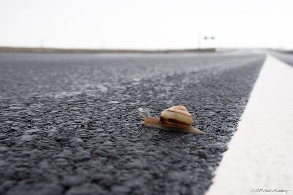Snail Art Print featuring the photograph Snail Crossing... by Carol Hathaway