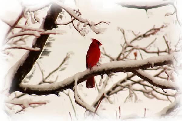 Cardinal Art Print featuring the painting Snow Cardinal by Janet Pugh