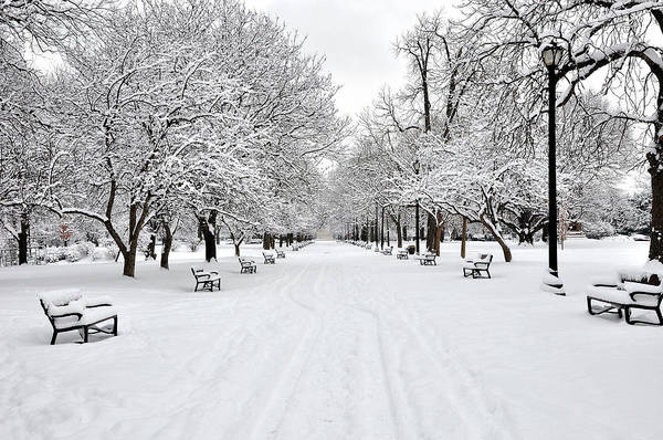 Horizontal Art Print featuring the photograph Snow Covered Benches And Trees In Washington Park by Shobeir Ansari