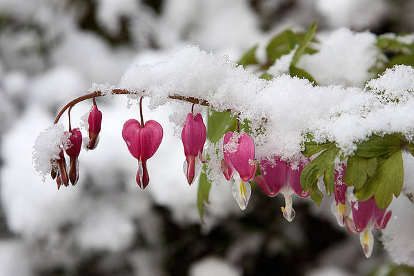 Snow Art Print featuring the photograph Snow Heart by Terry Walters
