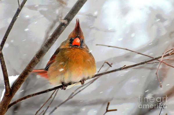 Bird Art Print featuring the photograph Snow Surprise by Lois Bryan