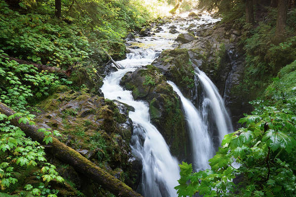 Sol Duc Falls Art Print featuring the photograph Sol Duc Solitude by Crystal Hoeveler