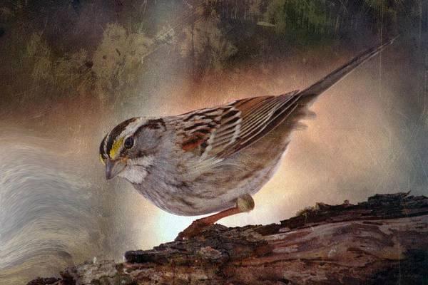 Sparrow Art Print featuring the photograph Soul Catcher...  by Arthur Miller