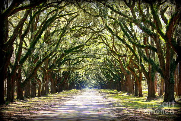 Landscape Art Print featuring the photograph Southern Way by Carol Groenen