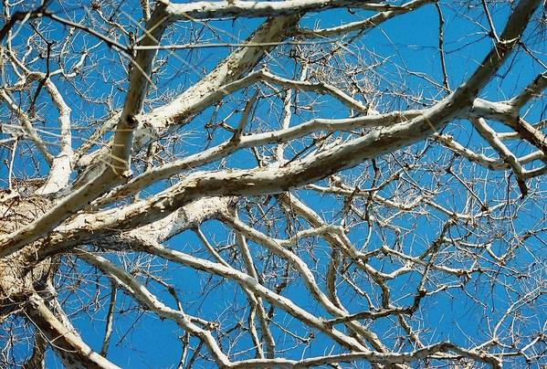 Tree Art Print featuring the photograph Space Dream by Jennifer Trone