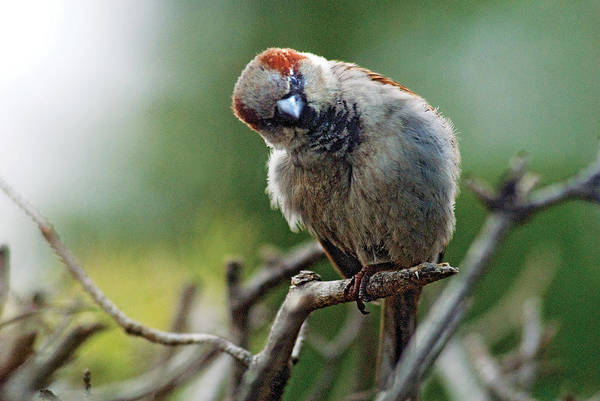Humor Art Print featuring the photograph Sparrow Puzzled At What It Sees by Steve Somerville