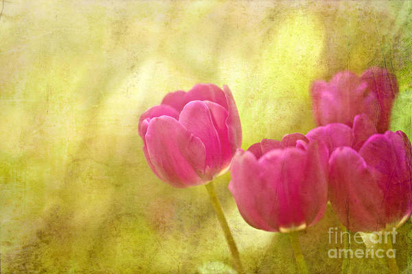 Photomanipulation Art Print featuring the photograph Spring Is In The Air by Beve Brown-Clark Photography