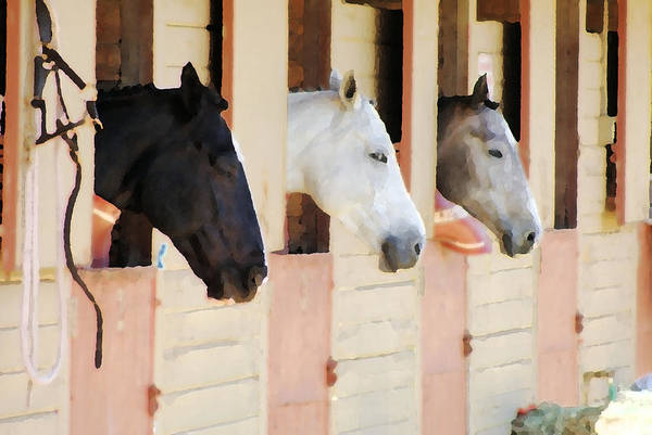 Horse Art Print featuring the photograph Stable Series by Ellen Lerner ODonnell