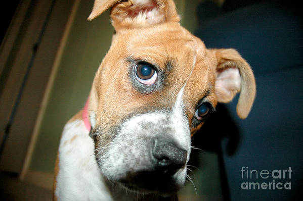 Dog Art Print featuring the photograph Strike A Pose by Maureen Norcross