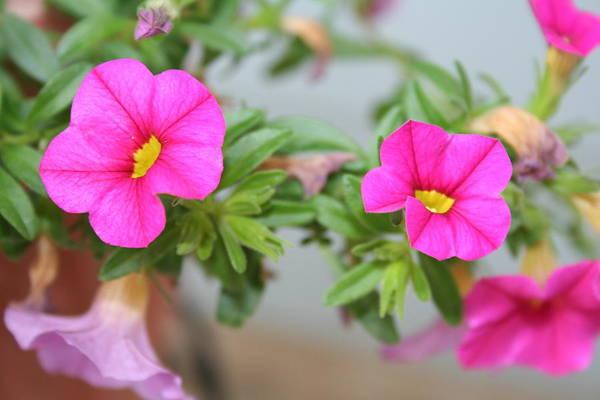 Flowers Art Print featuring the photograph Summer Flowers by Linda Sannuti