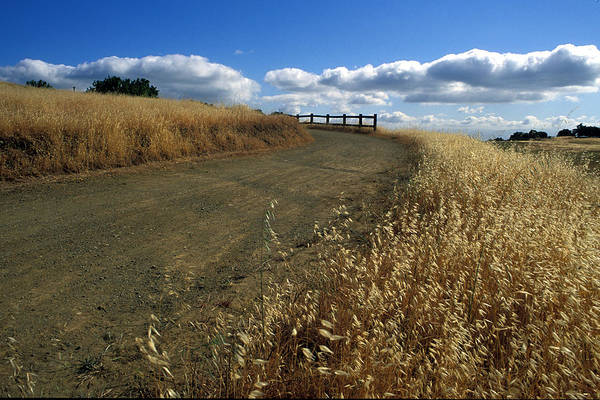 Landscape Art Print featuring the photograph Summer Road by Kathy Yates