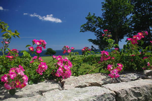 Summer Art Print featuring the photograph Summer Roses by Jf Halbrooks
