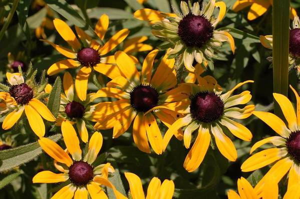 Flower Art Print featuring the photograph Sun And Shade by Jame Hayes
