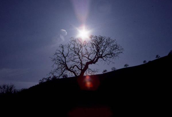 Sun Art Print featuring the photograph Sun On Tree by Chris Gudger