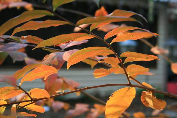 Fall Art Print featuring the photograph Sun Shing Through by Linda Ebarb