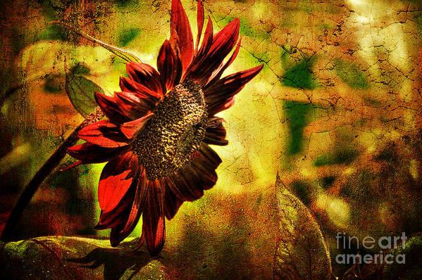 Sunflower Art Print featuring the photograph Sunflower by Lois Bryan
