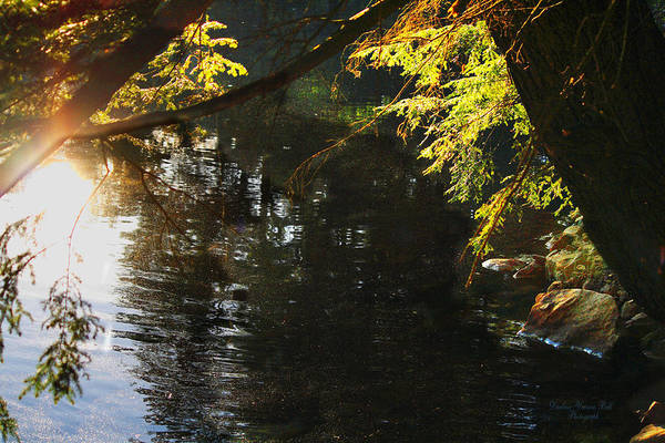 Reflections Art Print featuring the photograph Sunlight Reflections by Darlene Bell