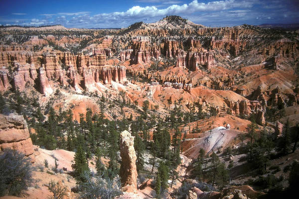 Bryce Art Print featuring the photograph Sunrise Trail Bryce Canyon by Brian Lockett