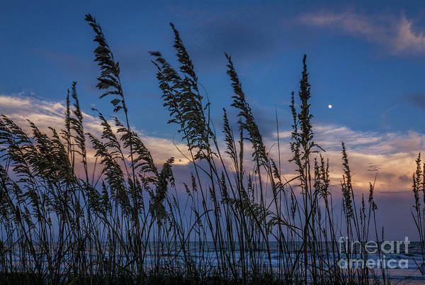 Dunes Art Print featuring the photograph Sunset And Moonrise Over The Ocean by Janet Barnes