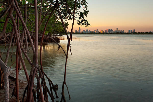 Miami Print featuring the photograph Sunset At Miami Behind Wild Mangrove Forest by Matt Tilghman