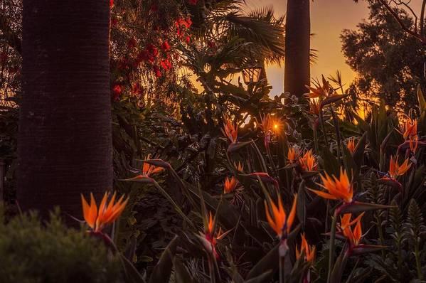 Garden Art Print featuring the photograph Sunset Garden by Livia Pavelescu