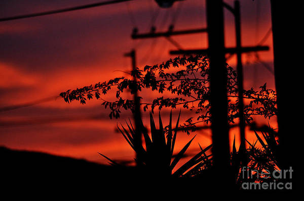 Clay Art Print featuring the photograph Sunset Sihouettes by Clayton Bruster