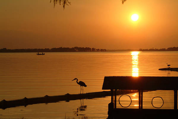Sunset Art Print featuring the photograph Sunsey On Lake Dora by Charles Ridgway