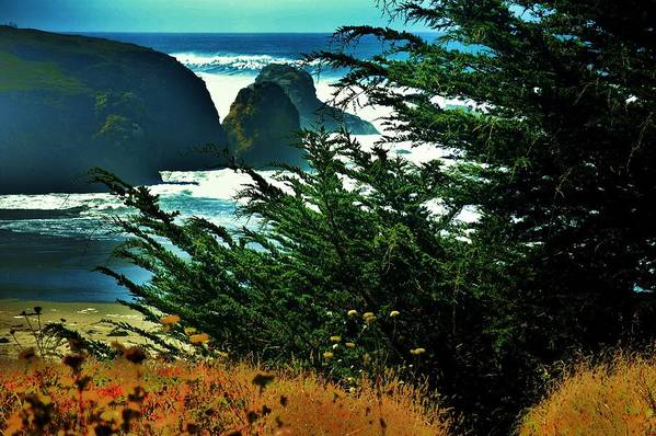 N. Ca Coast Art Print featuring the photograph Sunshine At The Coast by Helen Carson