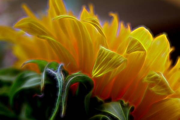 Composition Art Print featuring the digital art Sunshine Sunflower Petals Two by Mo Barton
