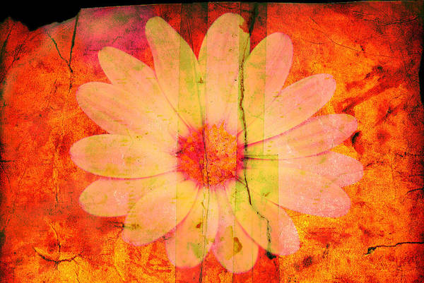 Flower Art Print featuring the photograph Surprise Me by Susanne Van Hulst