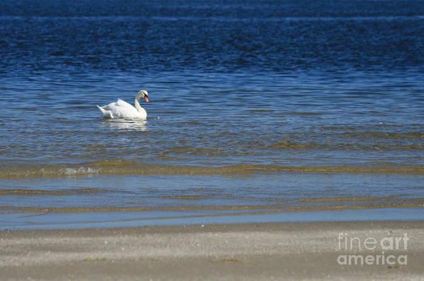 Swan Art Print featuring the photograph Swan by Marta Grabska-Press