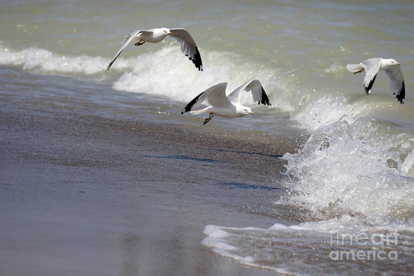 Seagull Art Print featuring the photograph Take Flight by Jeannie Burleson