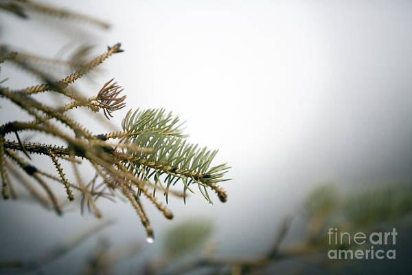 Winter Art Print featuring the photograph Thaw by Jeannie Burleson