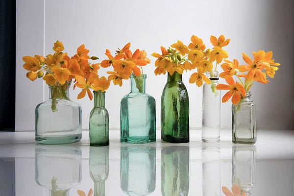 Background Art Print featuring the photograph the Blooming yellow Ornithogalum Dubium in a transparent bottle instead vase by Elena Rostunova