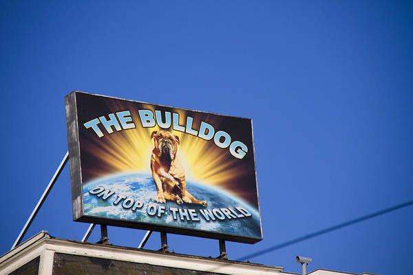Bulldog Art Print featuring the photograph The Bulldog On Top Of The World by Lauren Pfahlert
