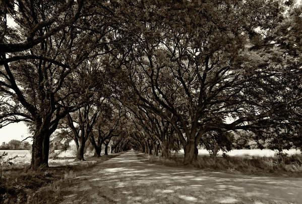 Evergreen Plantation Art Print featuring the photograph The Deep South Bw by Steve Harrington