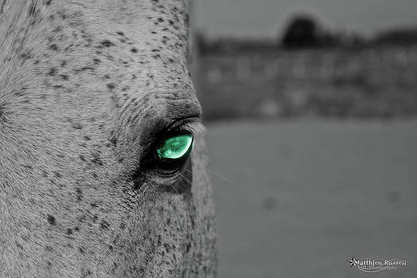 Art Print featuring the photograph The Green Eyed Horse by Matthieu Russell
