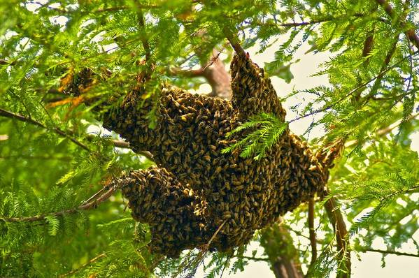 Animals Art Print featuring the photograph The Hive by Dale Chapel