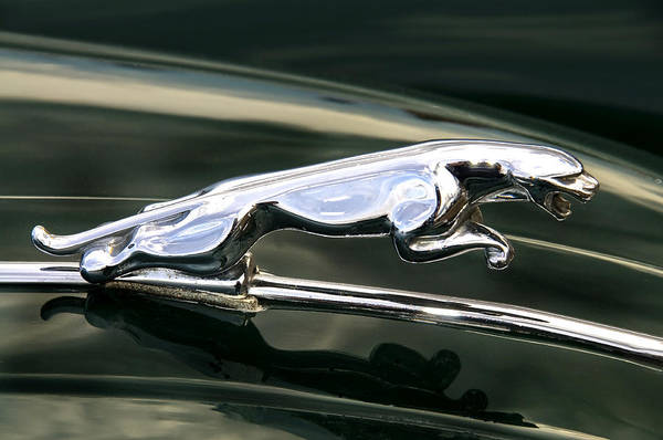 Motormania Art Print featuring the photograph The Leaping Jaguar by Daniela White